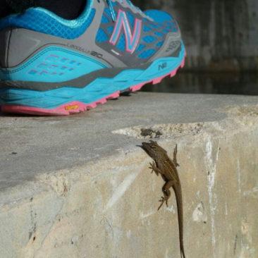 Ein Gecko inspiziert Katerinas Schuh