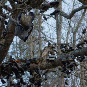 Baum voller alter Schuhe bei Neels Gap