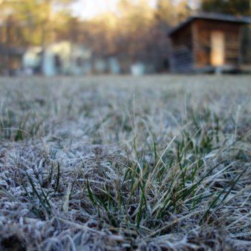Eiskalter Morgen am Blueberry Patch Hostel