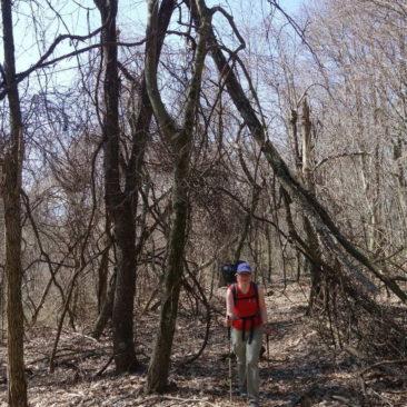 Katerina und das Baumgewirr