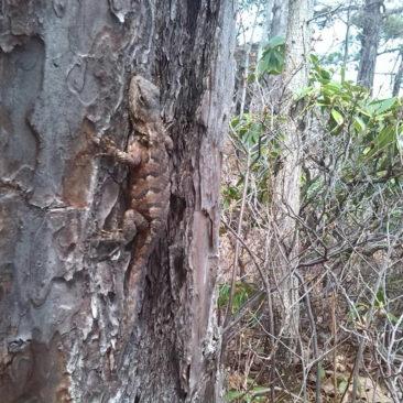 Eidechse am Baum