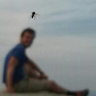 Fliegen-Alarm auf McAfee Knob
