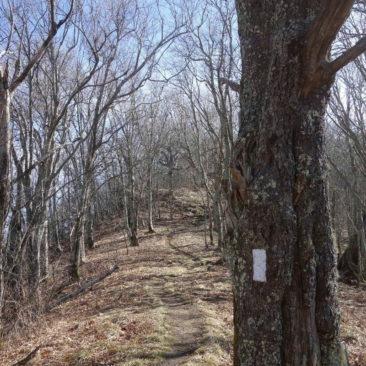 Die typische weiße Markierung und ein typischer Trail