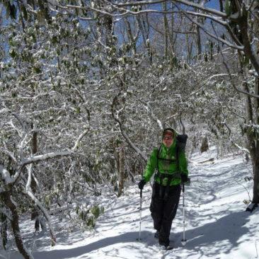 Durch Winterwald