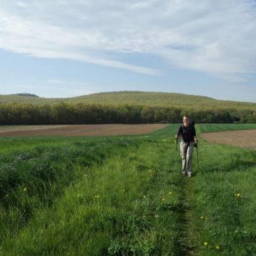 Feld statt Wald - angenehme und schöne Abwechslung!