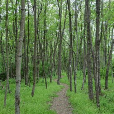 Ab durch die Mitte bzw. den Wald