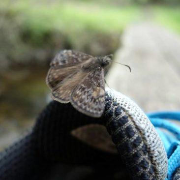 Schmetterling an Milkmonstas Schuh