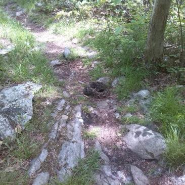 Klapperschlange mitten auf dem Weg