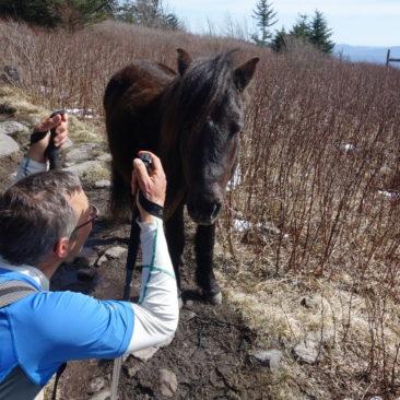 Auf einer Höhe mit dem Pony