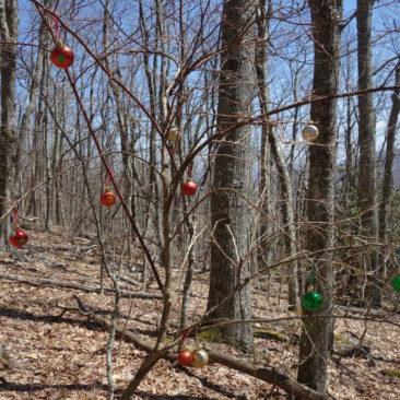 Weihnachtsbaumschmuck mitten im Wald - warum auch immer