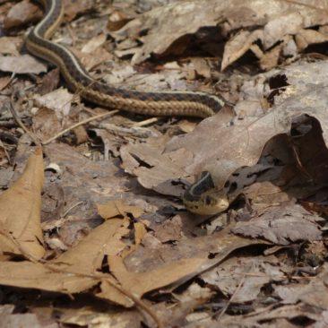 Im Frühling erwachen auch die Schlangen zu neuem Leben