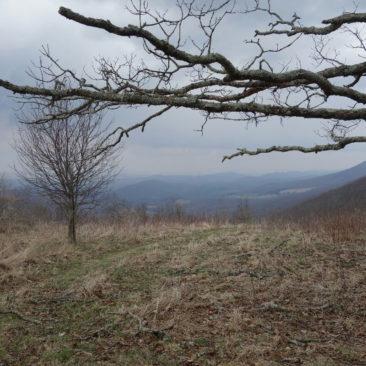 Mal kurz raus aus dem Wald (hier hinter Pearisburg, VA)