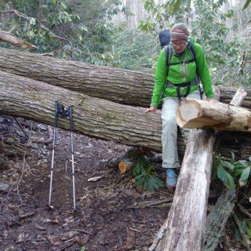 """Nicht immer ist der Trail bereits von umgestürzten Bäumen """"bereinigt"""""""