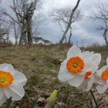 Blumen an den Tinker Cliffs