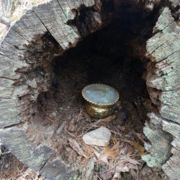 Kleine Überraschung in einem hohlen Baumstamm