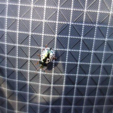 Kleiner Besucher auf unserem Rucksack