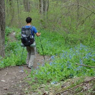 Durch ein Spalier blauer Blumen