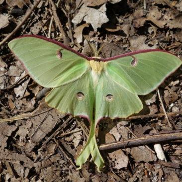 Schöne Schmetterlinge gibt es ebenfalls viele entlang des Trails.