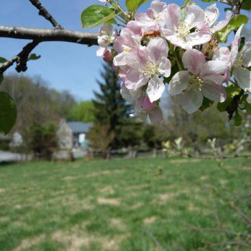 Blüte eines Baumes