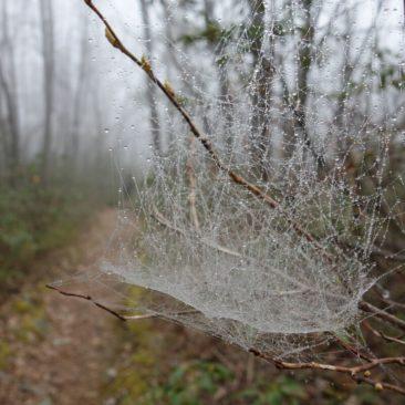 Spinnennetz mit Morgentau.