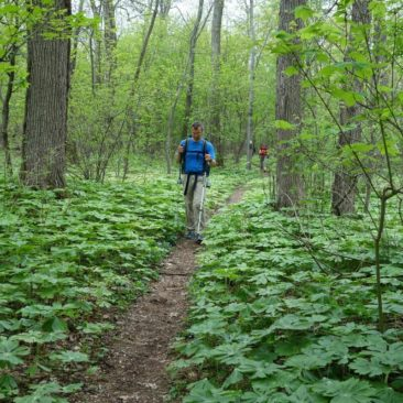 Weg durch grünen Wald