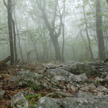 Steiniger Abschnitt im Norden von Pennsyvania