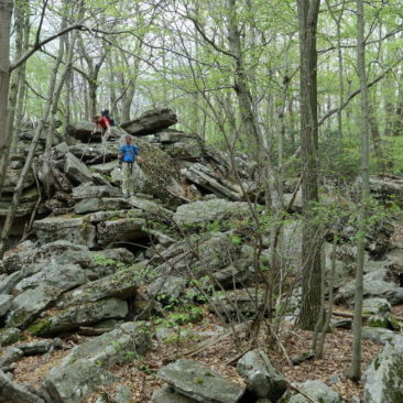 Auch Geröllfelder gehören zum Norden von Pennsyvania dazu.