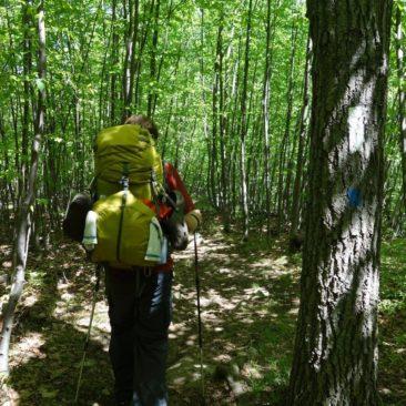 Mittlerweile (Ende Mai) ist der Wald komplett grün