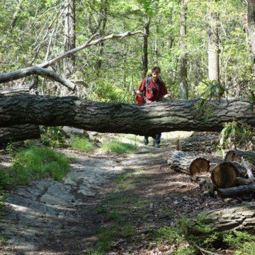 Baum versperrt Weg
