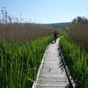 Erneut Boardwalk im Sumpf