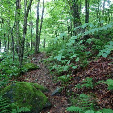 Auch mal lichterer Weg in Vermont
