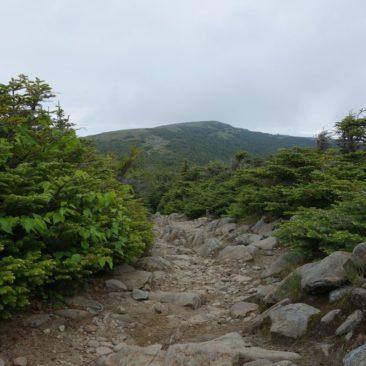 Der Weg zum Gipfel von Mount Moosilauke (im Hintergrund)