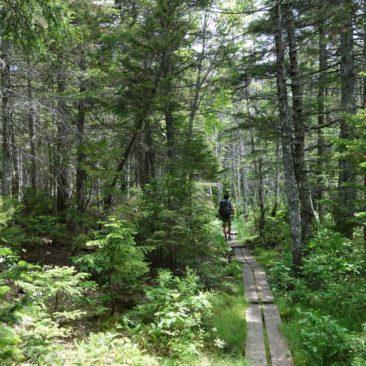 Boardwalk durch dichten Wald