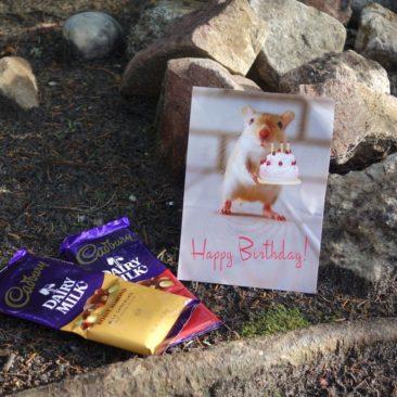 Katerinas Geburtstagsgeschenk von Crunchie und TimeOut