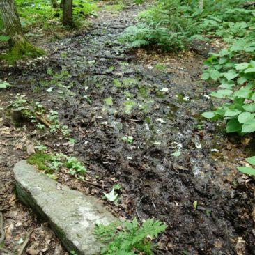 Matschiger Trail in Maine