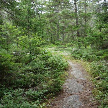 In der 100 Mile Wilderness ist der Trail meist einfach