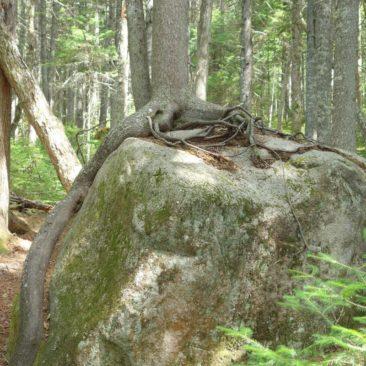 Die Natur findet immer ihre Wege - so wie dieser Baum