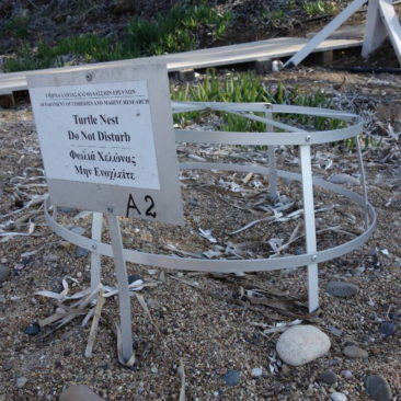 Naturschutz: Schildkrötennest am Strand
