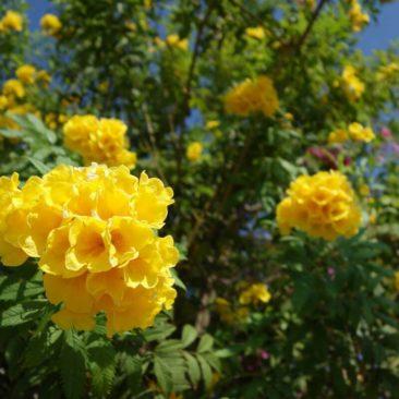 Blumen am Wegesrand in voller Pracht - selten, dass hier noch was blüht