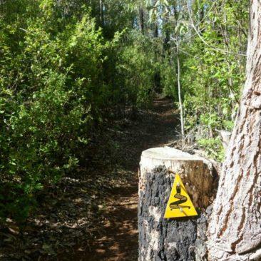 Die typisch gelbe Wegmarkierung auf einem ebenso typischen Waldstück