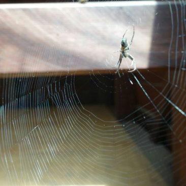 Auch Spinnen mit beeindruckenden Netzen gibt es unterwegs und in den Hütten