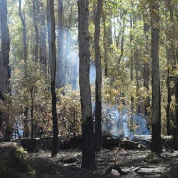 Überreste eines kontrollierten Buschfeuers