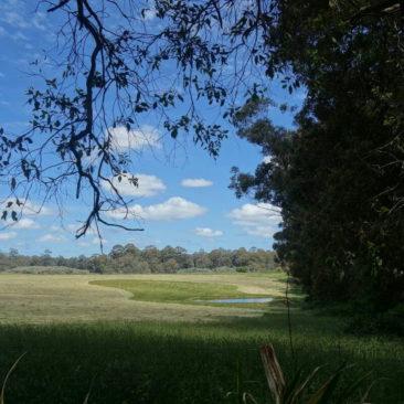 Ausblick auf ein Feld nahe Pemberton