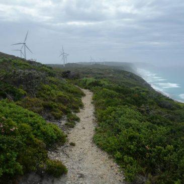 Die Windmühlen kurz vor Albany