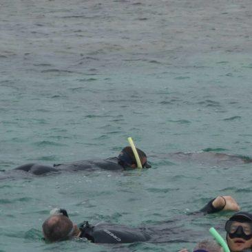 Robert (gelber Schnorchel) beim Schwimmen mit den Seehunden