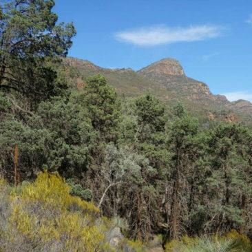Blick auf Mount St. Mary in der Flinders Range