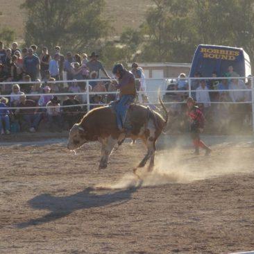 Der Klassiker beim Rodeo: Bullenreiten