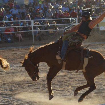 Auch Pferde kommen beim Rodeo zum Einsatz