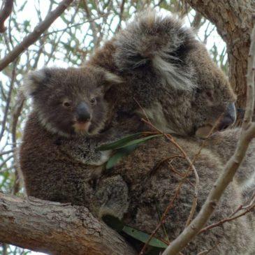 Eyre Halbinsel und Flinders Range – tierisch was los