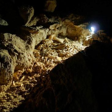 Ca. 20.000 Jahre altes Skelett eines Moa